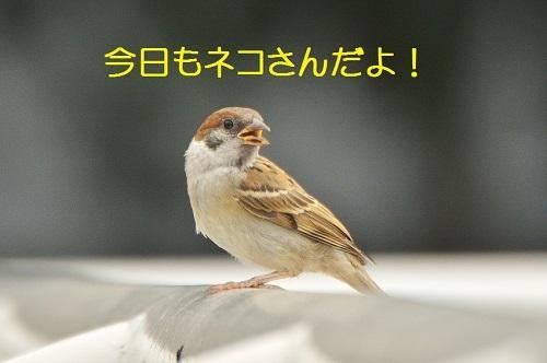 010_20170620194101c81.jpg
