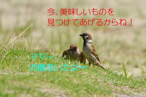 010_2017072519174010c.jpg
