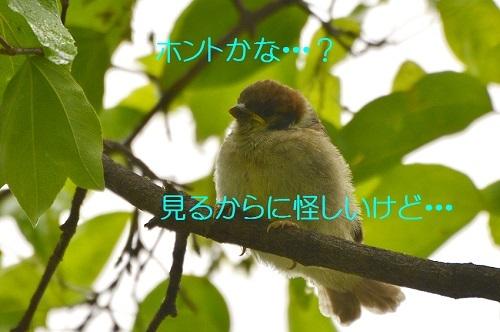 020_20170510190639b0a.jpg