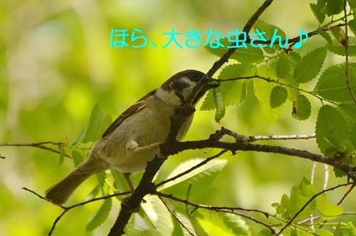020_20170513212636ed2.jpg
