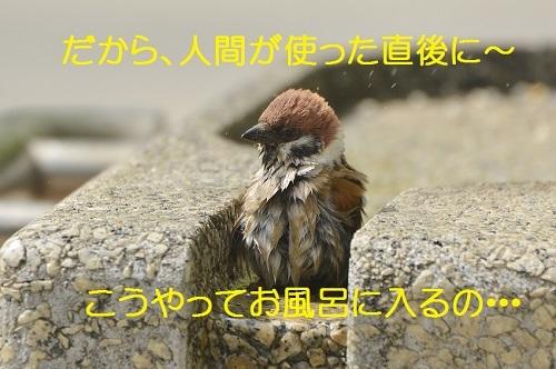 020_20170514203216381.jpg