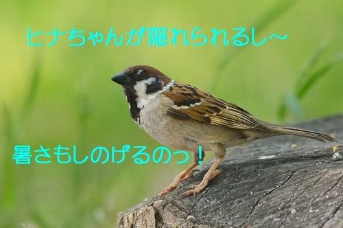 020_20170527212424aab.jpg