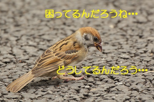 020_20170624223830abf.jpg