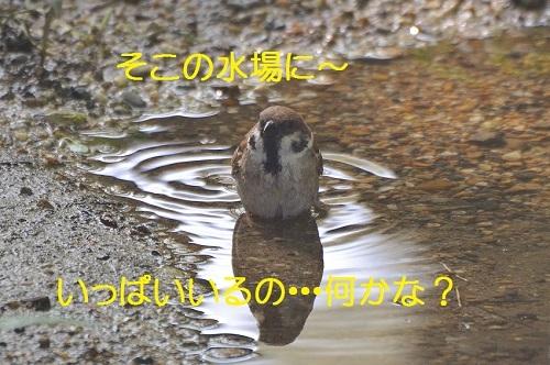 020_20170805233412cf8.jpg