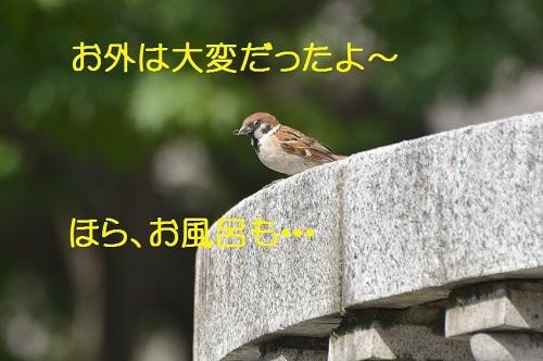 020_201708082044264c6.jpg