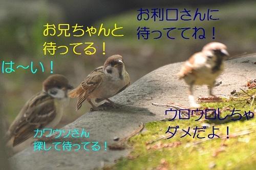 020_2017081921210397c.jpg