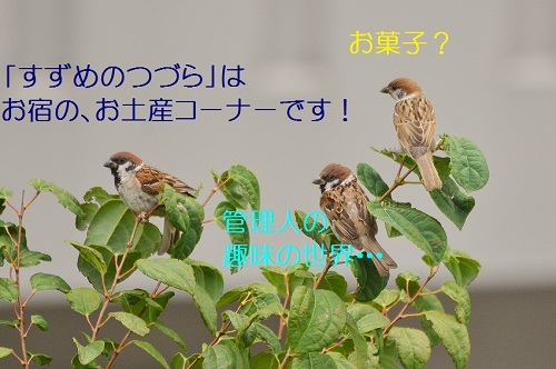 020_20170904034101a27.jpg