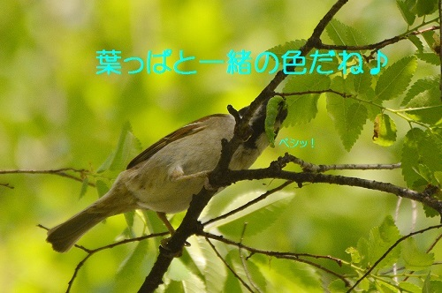 030_201705132126377b6.jpg