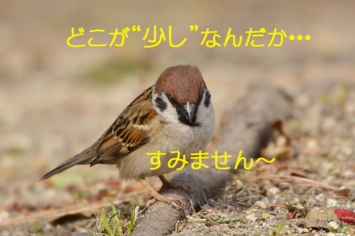 030_20170517180657e39.jpg