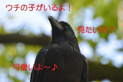 030_20170521202340073.jpg