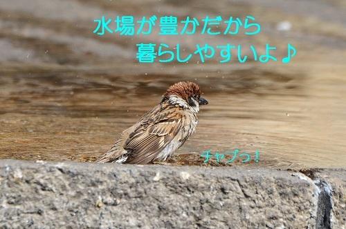 030_2017052320343560f.jpg