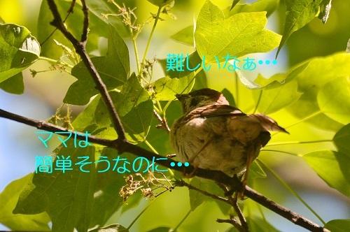 030_20170524212944c74.jpg