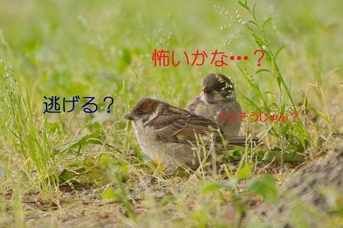 030_20170605213750f41.jpg