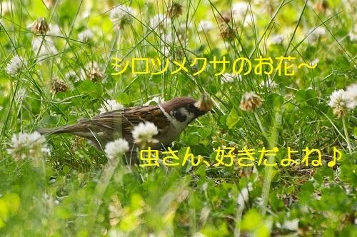 030_20170608191405d88.jpg