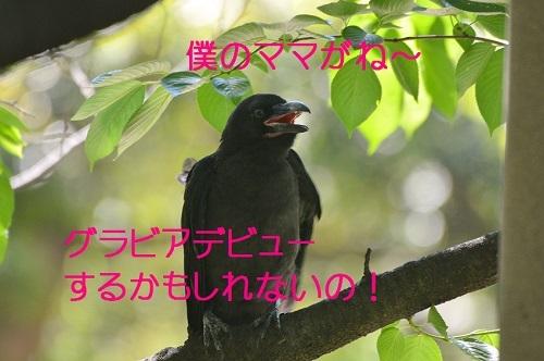 030_2017061619062632c.jpg