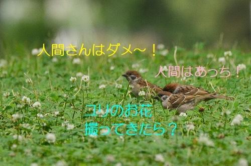 030_2017061718365706e.jpg