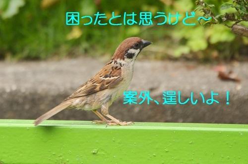 030_20170624223832602.jpg