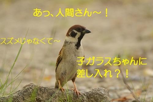 040_20170604212851930.jpg