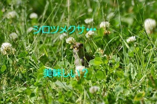 040_201706081914076b2.jpg