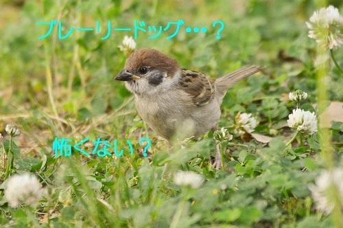 040_201706151950234b5.jpg