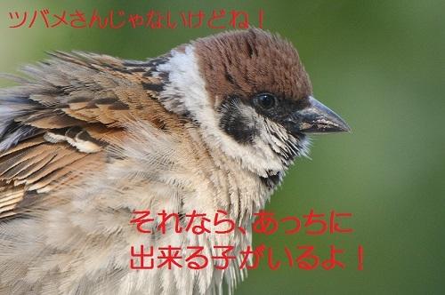 040_20170709200339abd.jpg