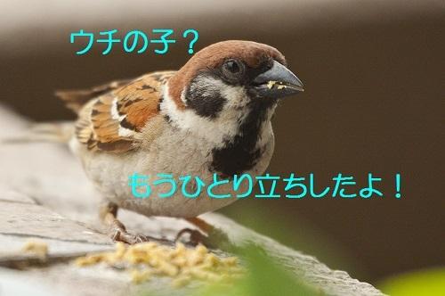 040_20170724183907ce6.jpg