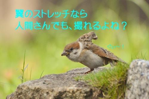 040_20170831194457cb7.jpg