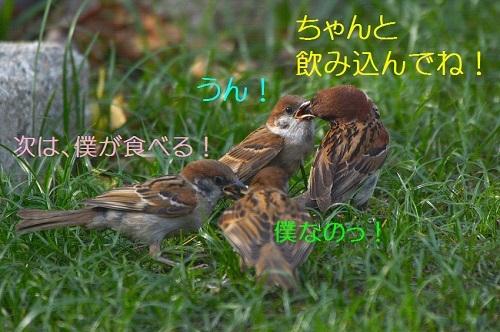 050_20170802193541770.jpg