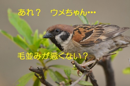 050_20170809210200fa4.jpg