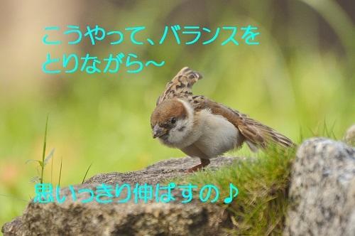050_20170831194459d19.jpg