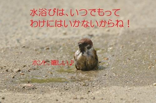 060_201705161820482c1.jpg