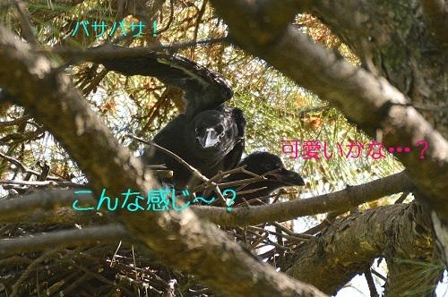 060_201705222014385be.jpg