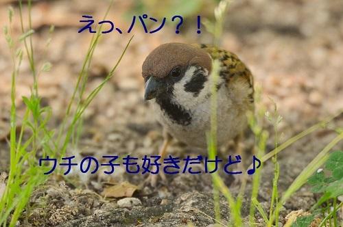 060_2017052421301569c.jpg