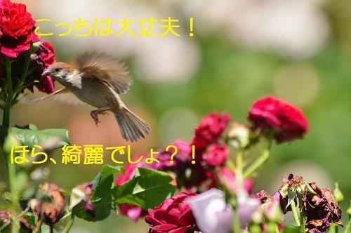 060_2017060919450608e.jpg