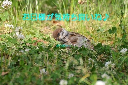 060_20170614214626c32.jpg