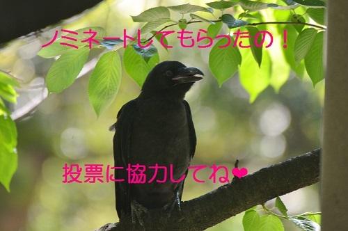 060_20170616190700874.jpg