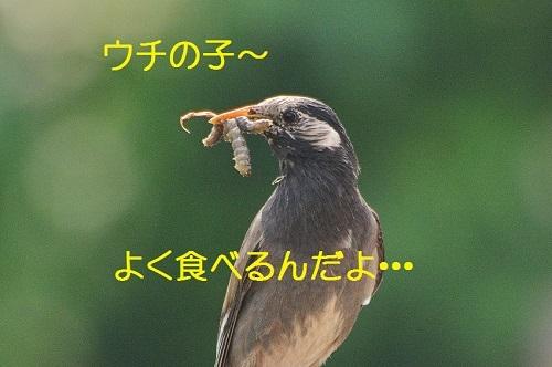 060_201706292005550f6.jpg