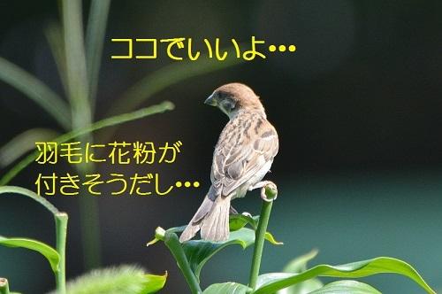 060_201707122124042aa.jpg