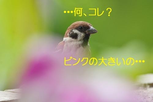 060_20170724183938258.jpg