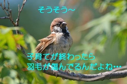060_20170814195801631.jpg