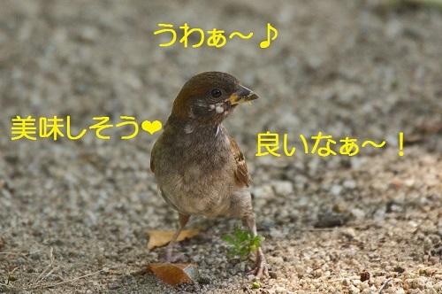 060_201708182121240ee.jpg