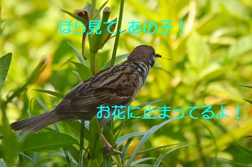 070_20170618193416a18.jpg