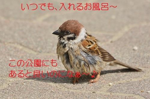 080_20170516182051ea8.jpg