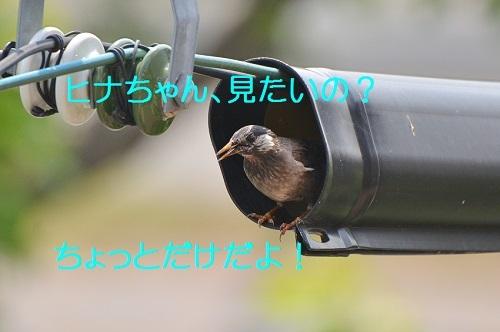 080_201706292005583a8.jpg