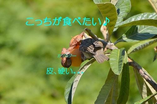 080_20170713200243b57.jpg