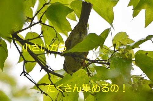 090_201705101908039bf.jpg