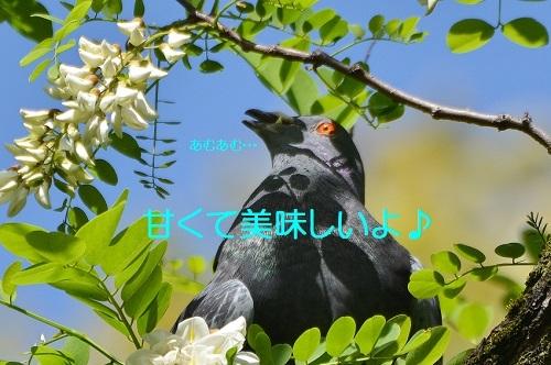 090_20170523203910cdb.jpg