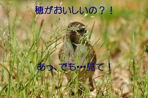 090_20170601184038c9a.jpg
