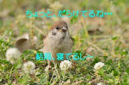 090_2017061519510280d.jpg