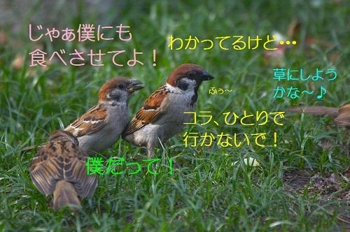 090_201708021940174fa.jpg